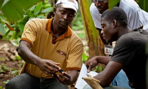Cocoa farmers in Côte d'Ivoire