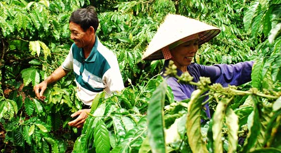 Commitment to Vietnamese coffee farmers